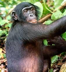 The C of E's newest primate?