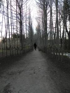 Marvin on a superlative walk